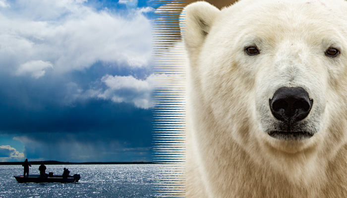 Polar Bear & pike