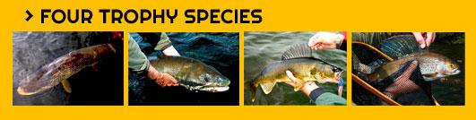 Four Trophy Species