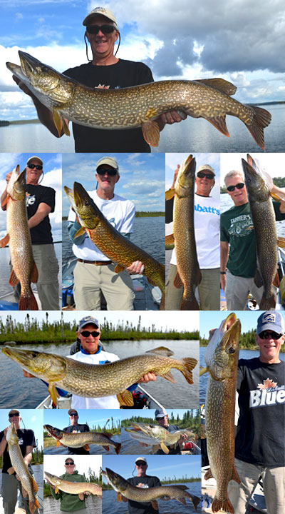 Trophy Pike images